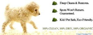 New York Pet Stain Removal