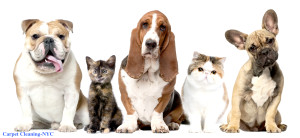 Pet Stain Removal NYC